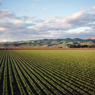 paysage avec champs et montagnes